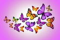 Picture design by Marika, purple, butterfly, colorful, butterflies