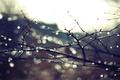 Picture autumn, branches, rain, branch
