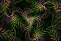 Picture line, fractal, pattern, symmetry