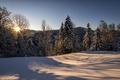 Picture winter, forest, the sun, snow, nature, morning, Switzerland, St. Gallen, Hulftegg, Philipp Häfeli Photography