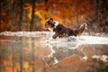Picture water, squirt, dog, running
