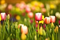 Picture flowers, focus, beauty, Park, widescreen Wallpaper, widescreen Wallpaper, leaves, freshness, greens, mood, yellow, flowers bokeh, ...