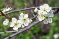 Picture flowers, branch, flowers, bokeh, sprig, blooms, flowering, cherry, spring