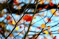 Picture widescreen, leaf, leaves, HD wallpapers, Wallpaper, tree, leaves, leaf, tree, full screen, background, branches, fullscreen, ...