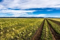 Picture road, field, landscape, Mongolia