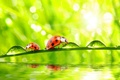 Picture grass, nature, water, macro, morning, drops, dew, ladybugs