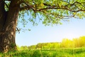 Picture greens, summer, the sun, nature, tree, foliage, Under the tree
