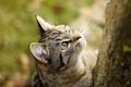 Picture cat, Wallpaper, Koshak, cat