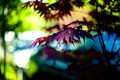 Picture widescreen, leaf, HD wallpapers, Wallpaper, leaf, tree, full screen, background, branches, fullscreen, macro, light, widescreen, ...