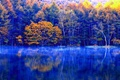 Picture lake, reflection, autumn, trees, forest