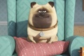 Picture collar, adventure, movie, sofa, Bobby Moynihan, smile, animal, table, drawing, happiness, cushion, official wallpaper, film, ...