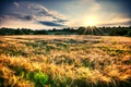 Picture field, the sky, the sun, rays, trees, landscape, nature, background, widescreen, Wallpaper, foliage, plants, spikelets, ...