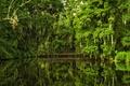 Picture bridge, reflection, Charleston, Magnolia Gardens, Charleston, trees, Gardens magnolias, South Carolina, South Carolina, water