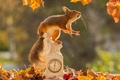Picture animal, watch, nature, rodent, protein, leaves, berries, autumn