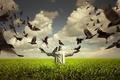 Picture field, birds, statue