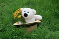 Picture toy, background, bouquet, Wallpaper, a bunch, in the hat, mishechka, mood, White, bear