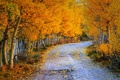 Picture road, autumn, nature