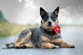 Picture collar, look, dog, flower