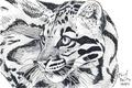 Picture eyes, mustache, look, animal, predator, art, leopard, pencil