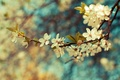 Picture flowers, branch, Wallpaper, leaves, color, branch, plant, spring
