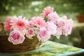 Picture basket, © Elena Di Guardo, gerbera, roses