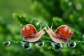 Picture drops, macro, meeting, snails