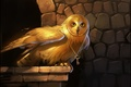 Picture key, wings, art, owl, bird, gold, eyes