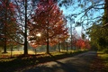 Picture the sun, rays, the sky, road, trees, autumn, sunset