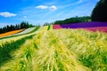 Picture summer, the sky, field, nature