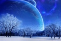 Picture the moon, trees, the sky, blue, winter
