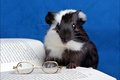 Picture glasses, book, Guinea pig