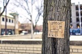 Picture cat, lost, tree, street, humor, ad, cat, gone