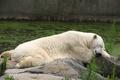 Picture Berlin zoo (Zoologischer Garten Berlin), light sleep, sea bear, stay, Germany, shore, summer 2007, pond, ...