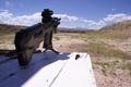 Picture assault, rifle, Tavor, TAR-21, the shooting range, machine