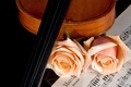 Picture beauty, notes, violin, music, roses