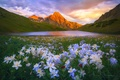 Picture flowers, lake, mountains, nature