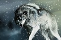 Picture wolf, rendering, snow